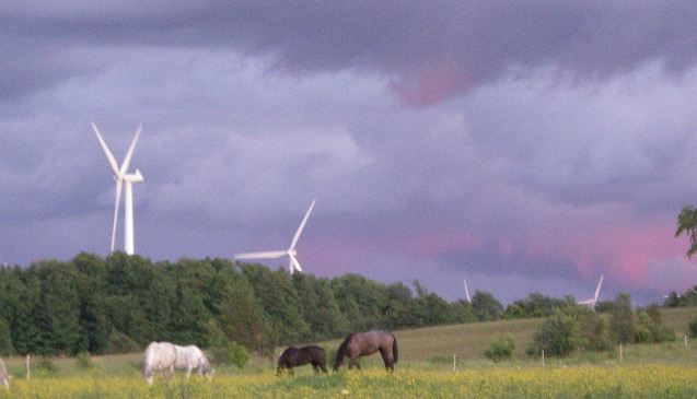 Irish Horses grazing under Northern NY wind turbines